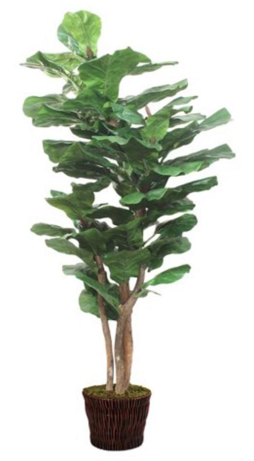 """85"""" Lush Fiddle-Leaf Tree w/ Basket, Faux"""