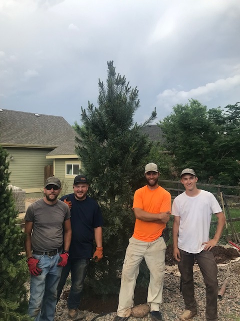 The crew installed their first 12ft tree! There were two 12ft trees to install at this job site. Lyons, CO July 2019