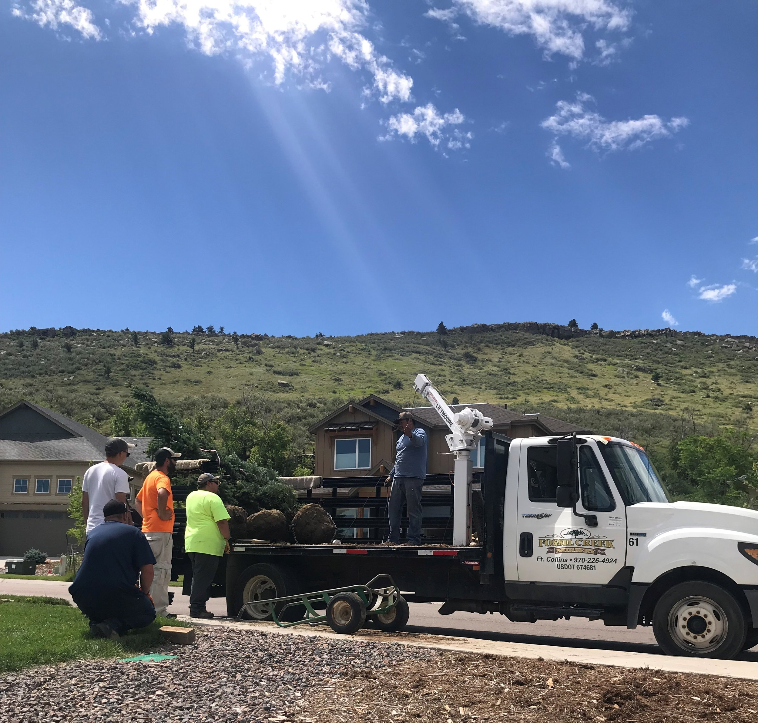 Big shout out to the amazing delivery crew at Fossil Creek Nursery for their assistance with these huge trees - we use Fossil Creek for their fantastic customer service and quality products!