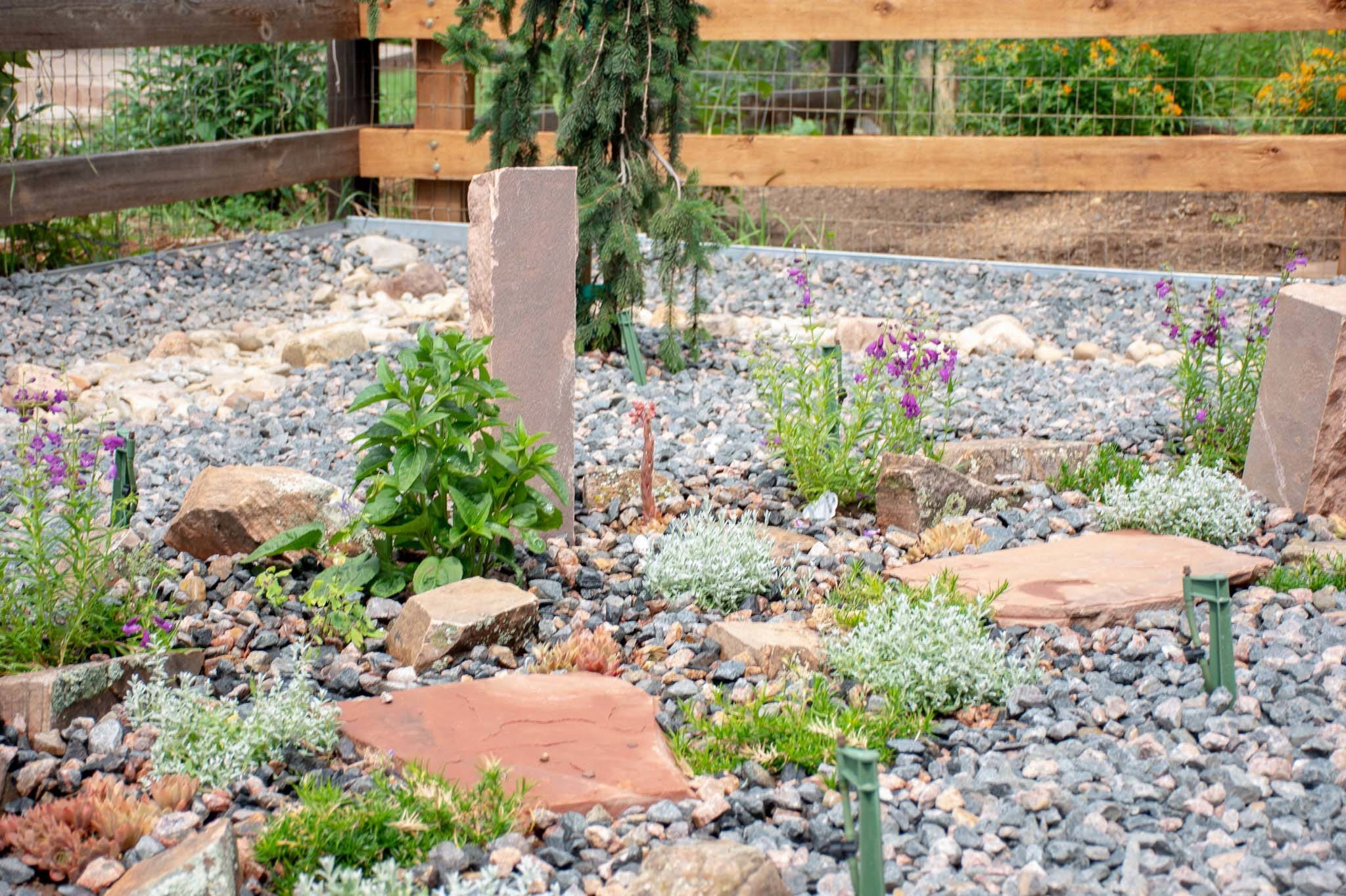 Close-up of Xeriscape/Natural landscaping in Lyons, CO 2019