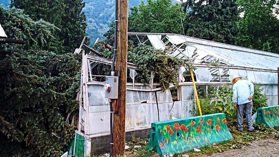 tree-hits-greenhouse.jpg