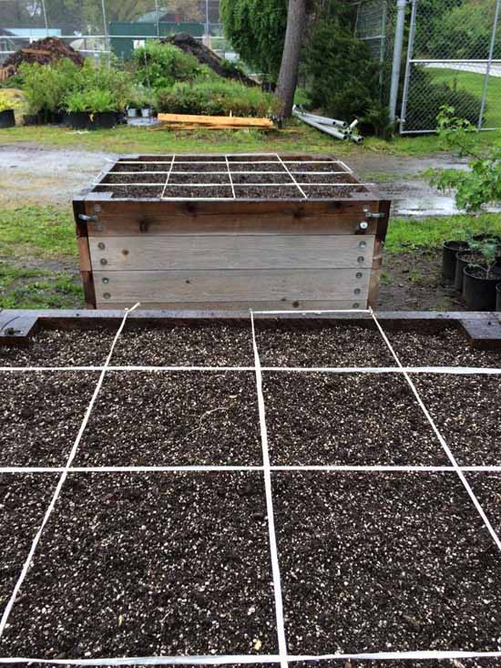 square foot garden boxes