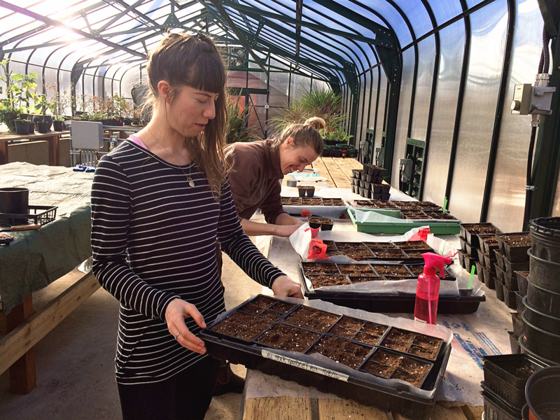 volunteers-helping-plants-the-seed-babies-web.jpg