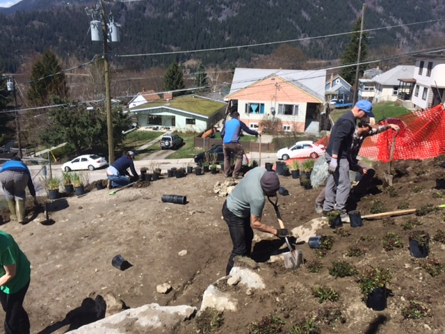 SN Slope project phase 2- planting.JPG
