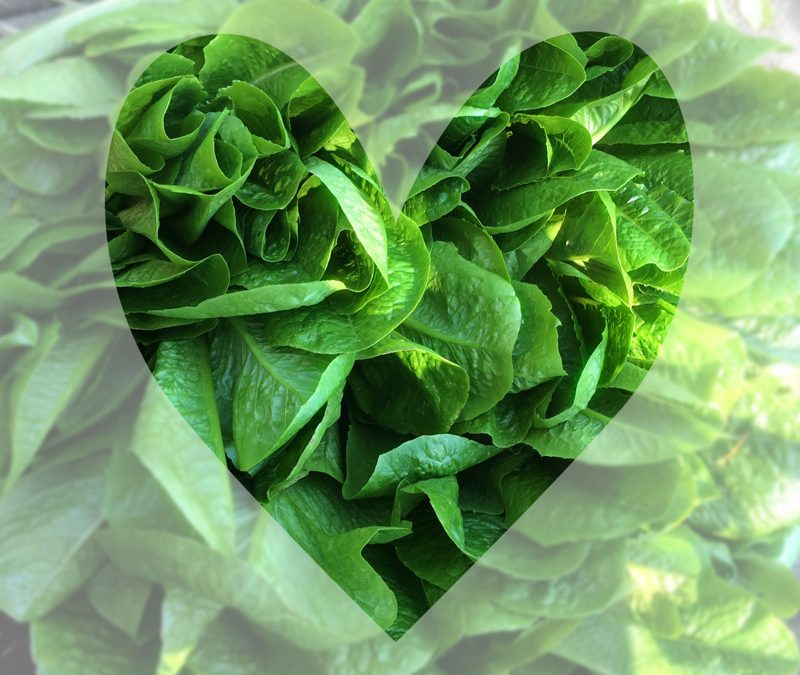 seeds-nelson-heart-greens-web.jpg