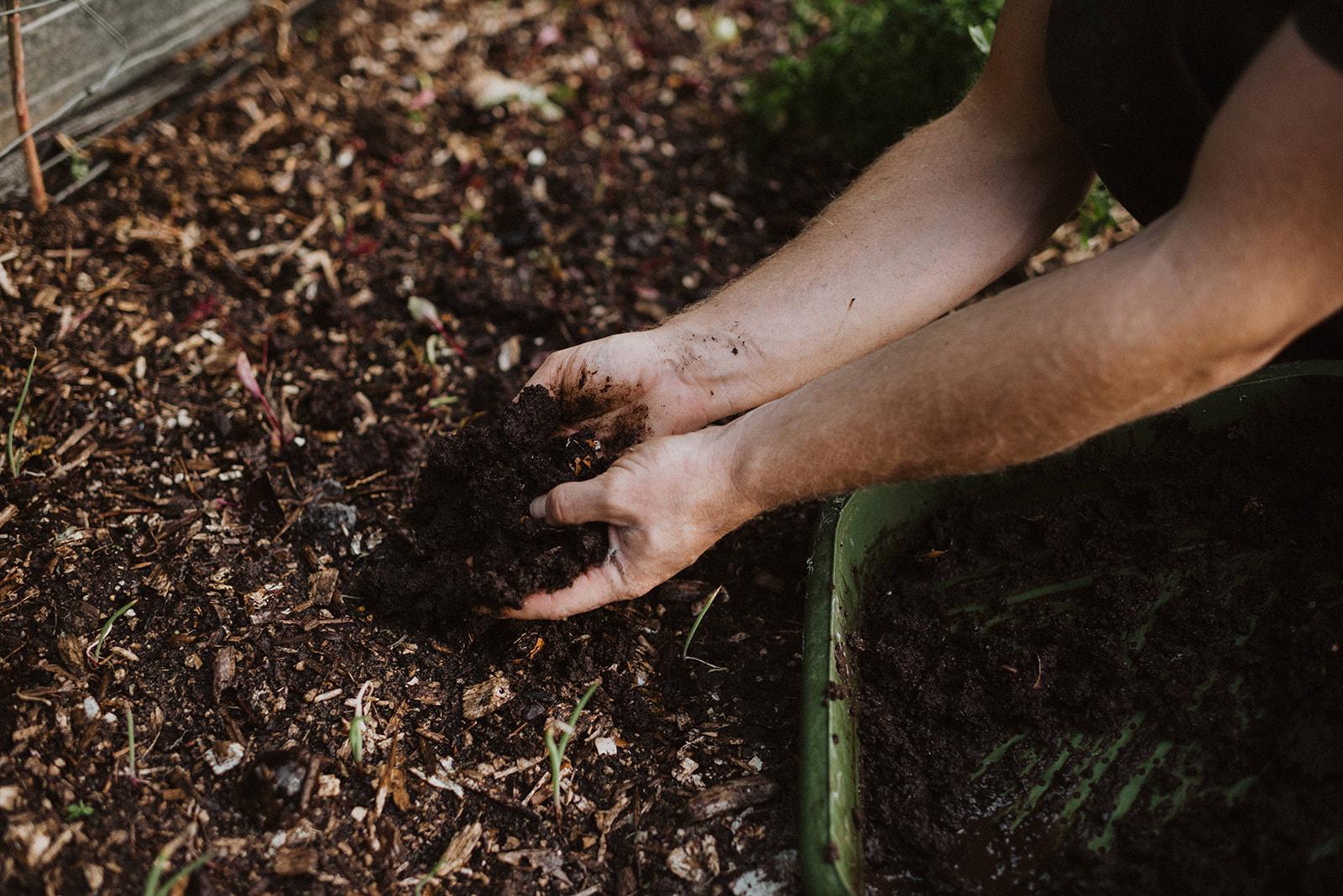 worm castings fertiliser.jpg
