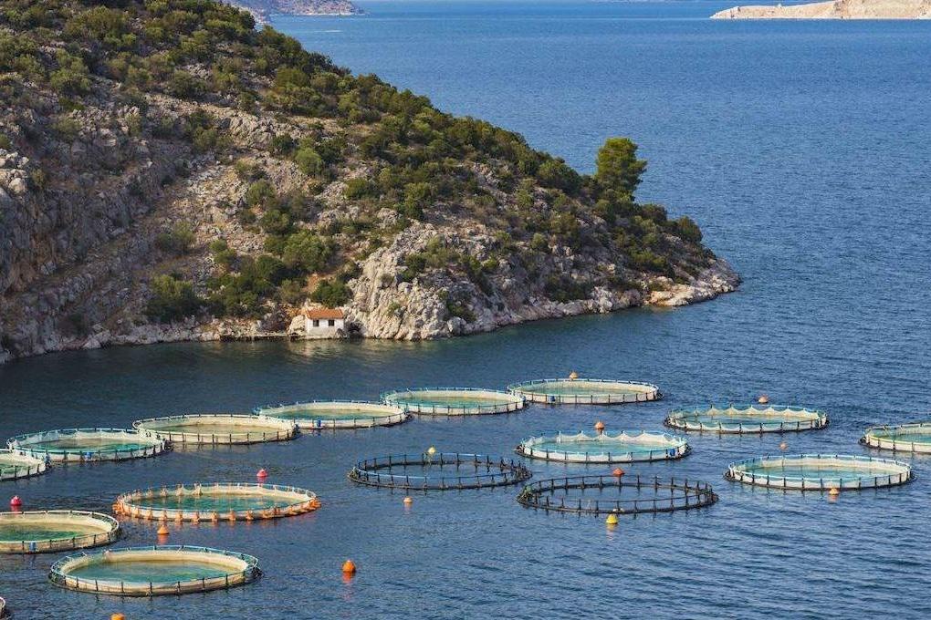 fish farming.jpg