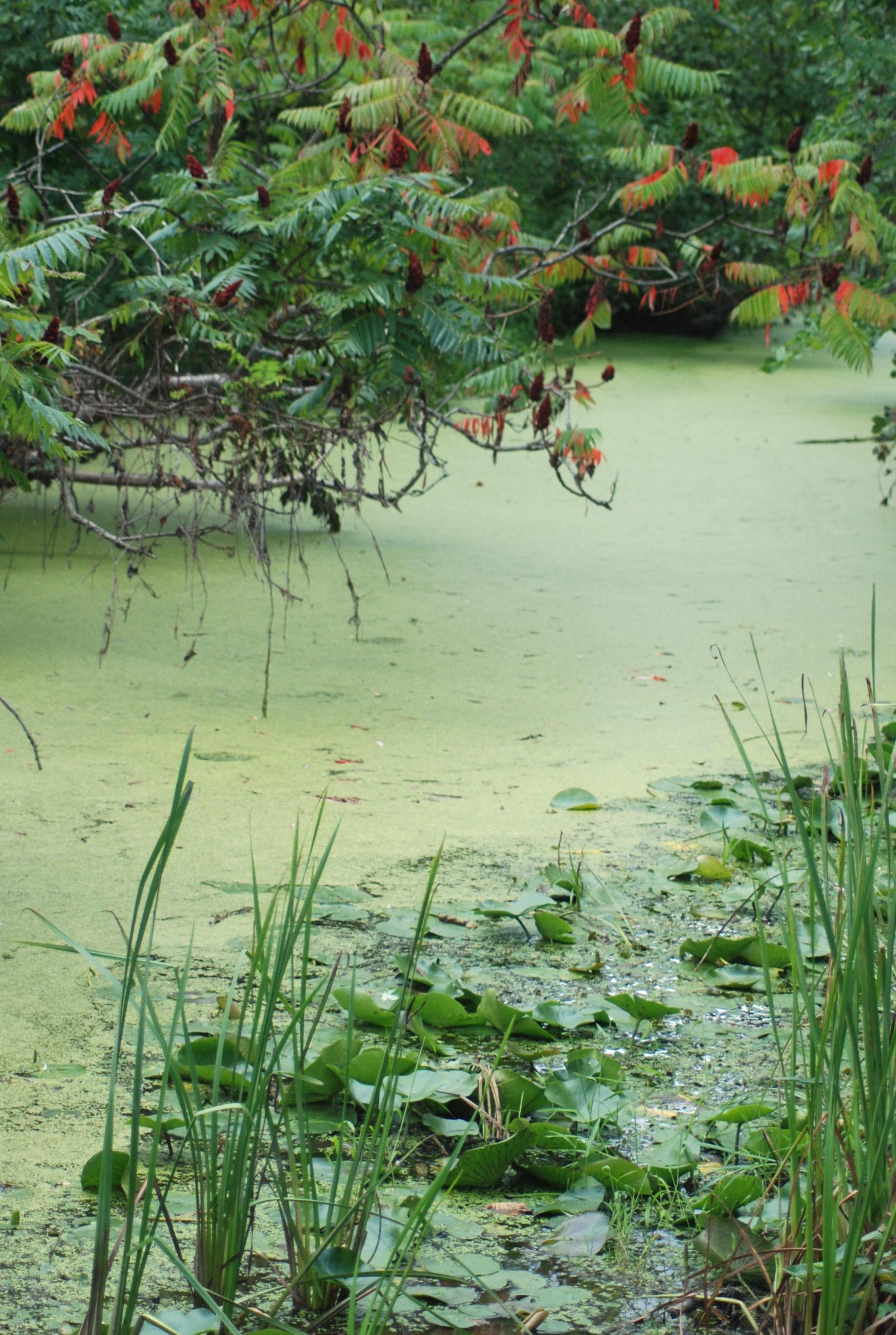 South Lancaster Swamp
