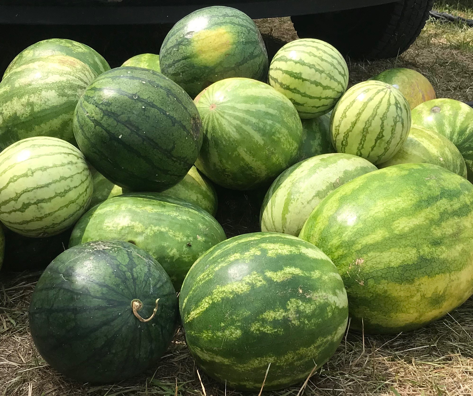 Multiple Melons