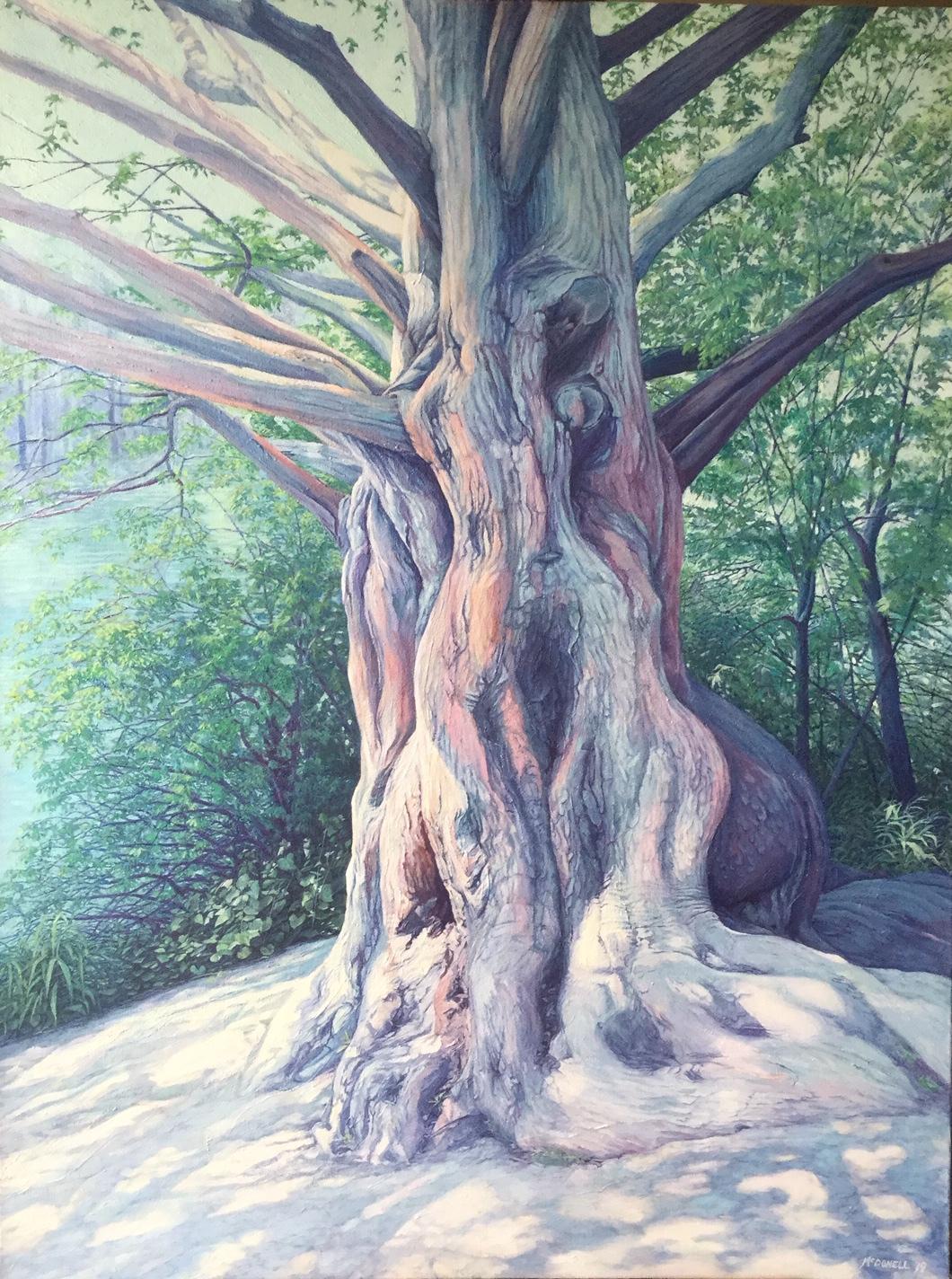 'High Park Cypress' (In Progress)