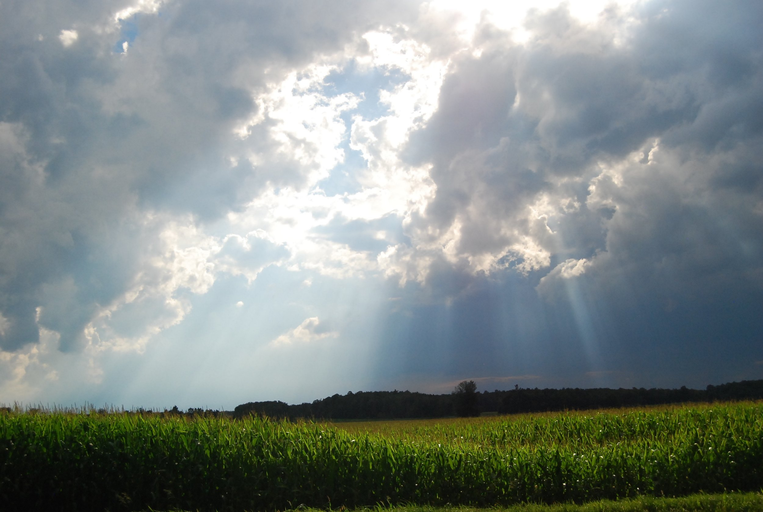 Rays on the Corn