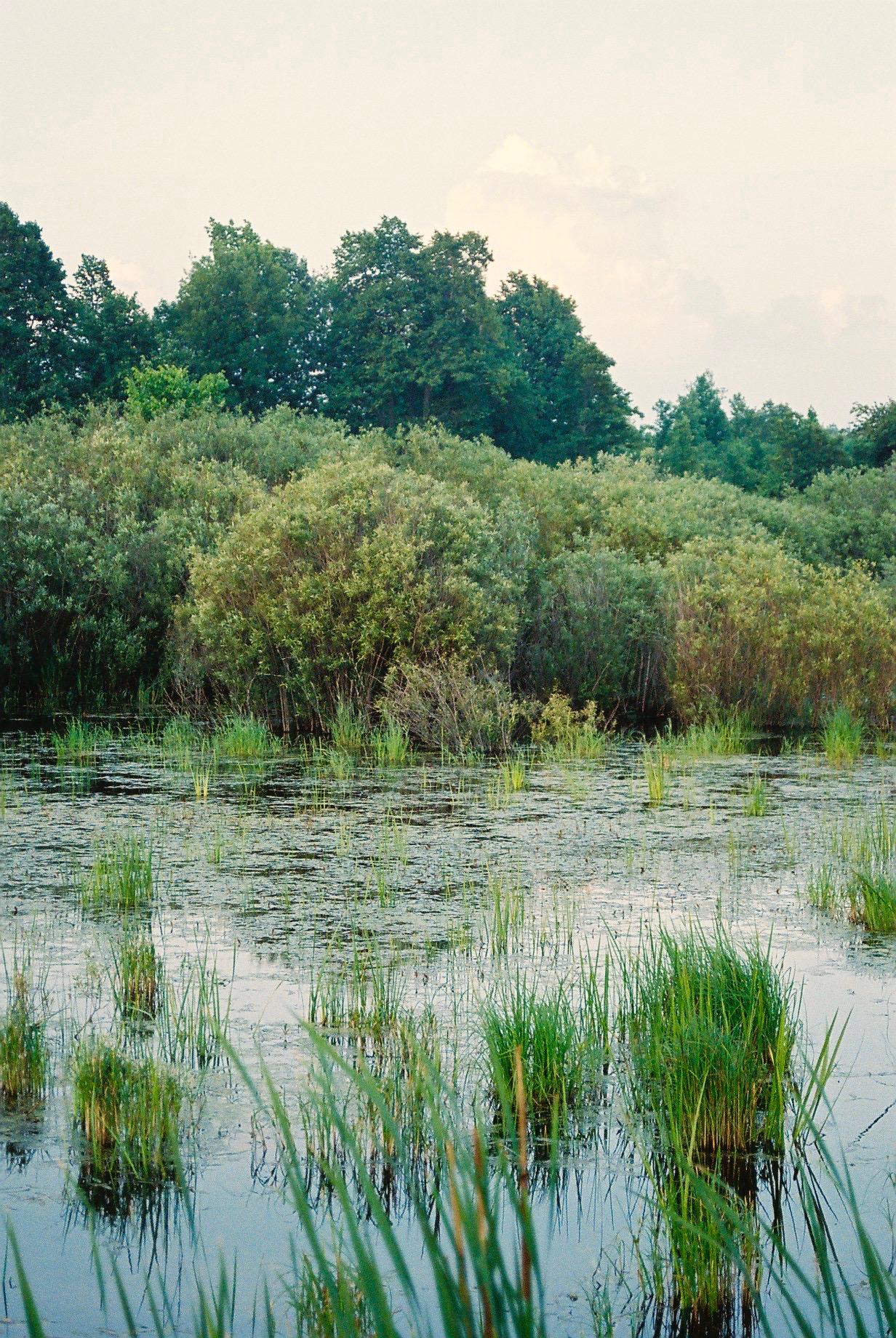 Greenfield Swamp