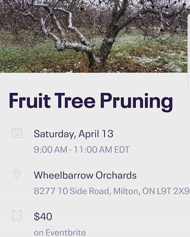 Search for our first farm edutainment event on Eventbrite  Come learn to care for your fruit tree and get free Fraser's Craft Cider! #Eventbrite #wheelbarroworchards #harvestgoodies #frasersbevey #milton #Georgetown  #acton #halton #apples #trees #spring