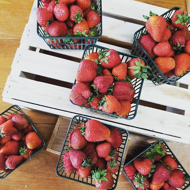 Strawberries now available at our Wheelbarrow Orchards farm market! We are proud to provide sustainable marketing and maximize income for our Ontario farm partners by being able to process our excess produce in our Harvest Goodies product line! Come support Ontario Farmers by shopping at Wheelbarrow Orchards!  #local #milton #Georgetown #shoplocal #harvestgoodies #frasersbeveragecompany #wheelbarroworchards #strawberry #strawberries #localfarm #miltonfarm #simplylocal