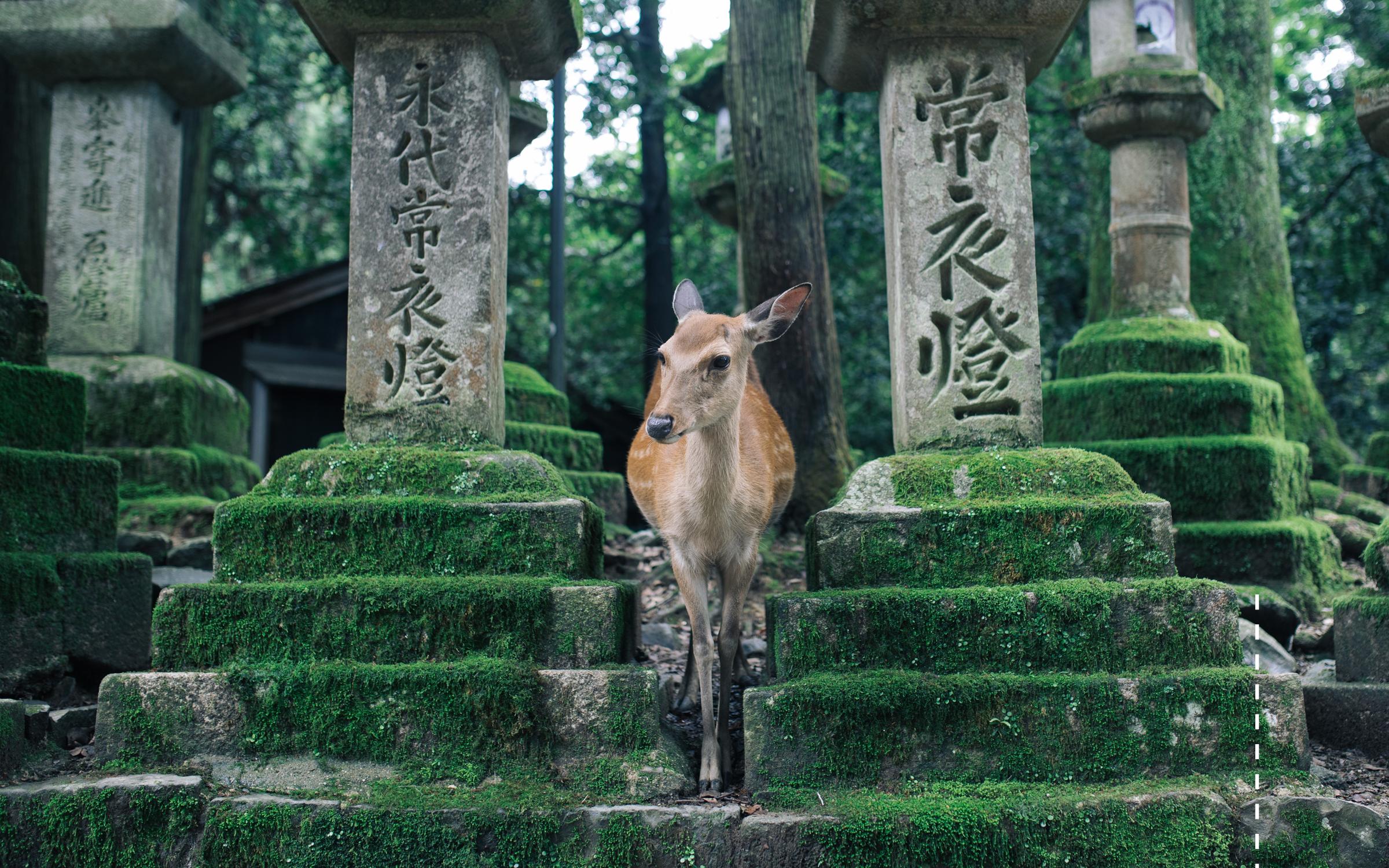 Japan10.png