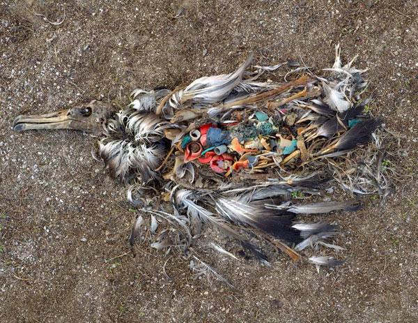 plastic-albatross.jpg