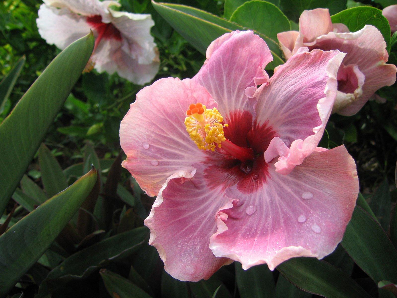 hawaii-3-1531124.jpg