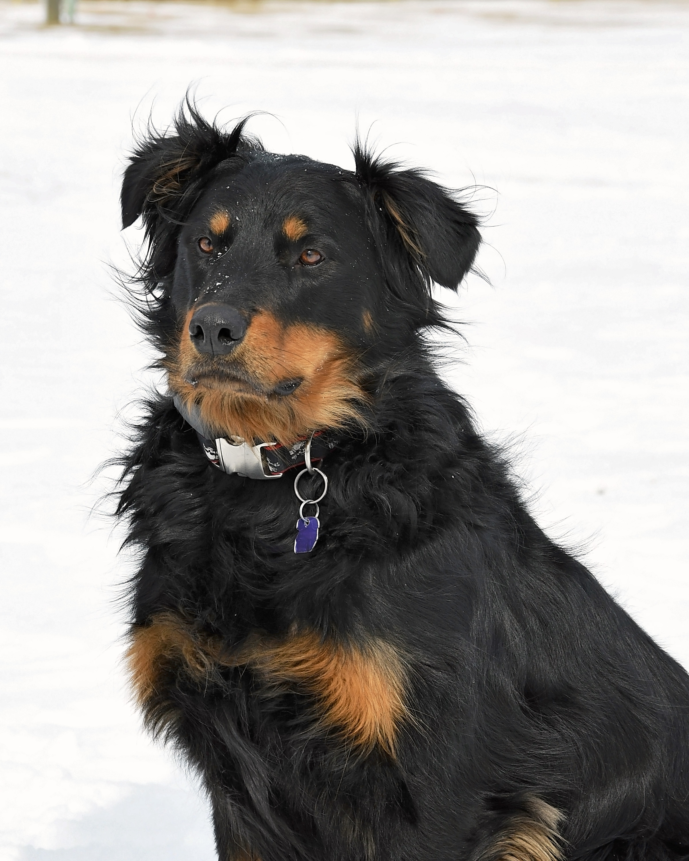 Lenny, 4, Rescued Nov 2017
