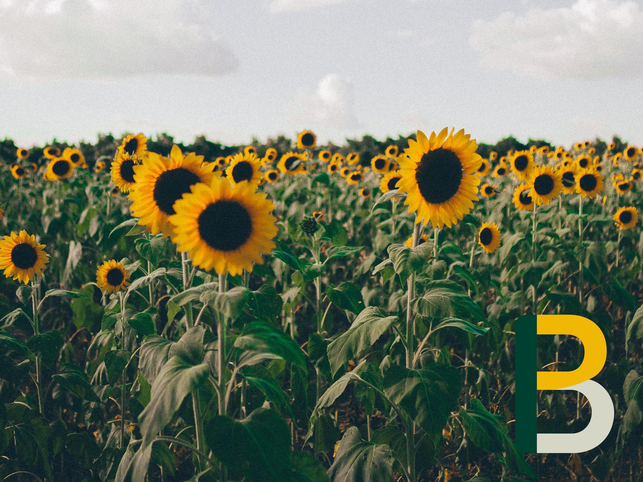B biobrandstof zonnebloem.jpg