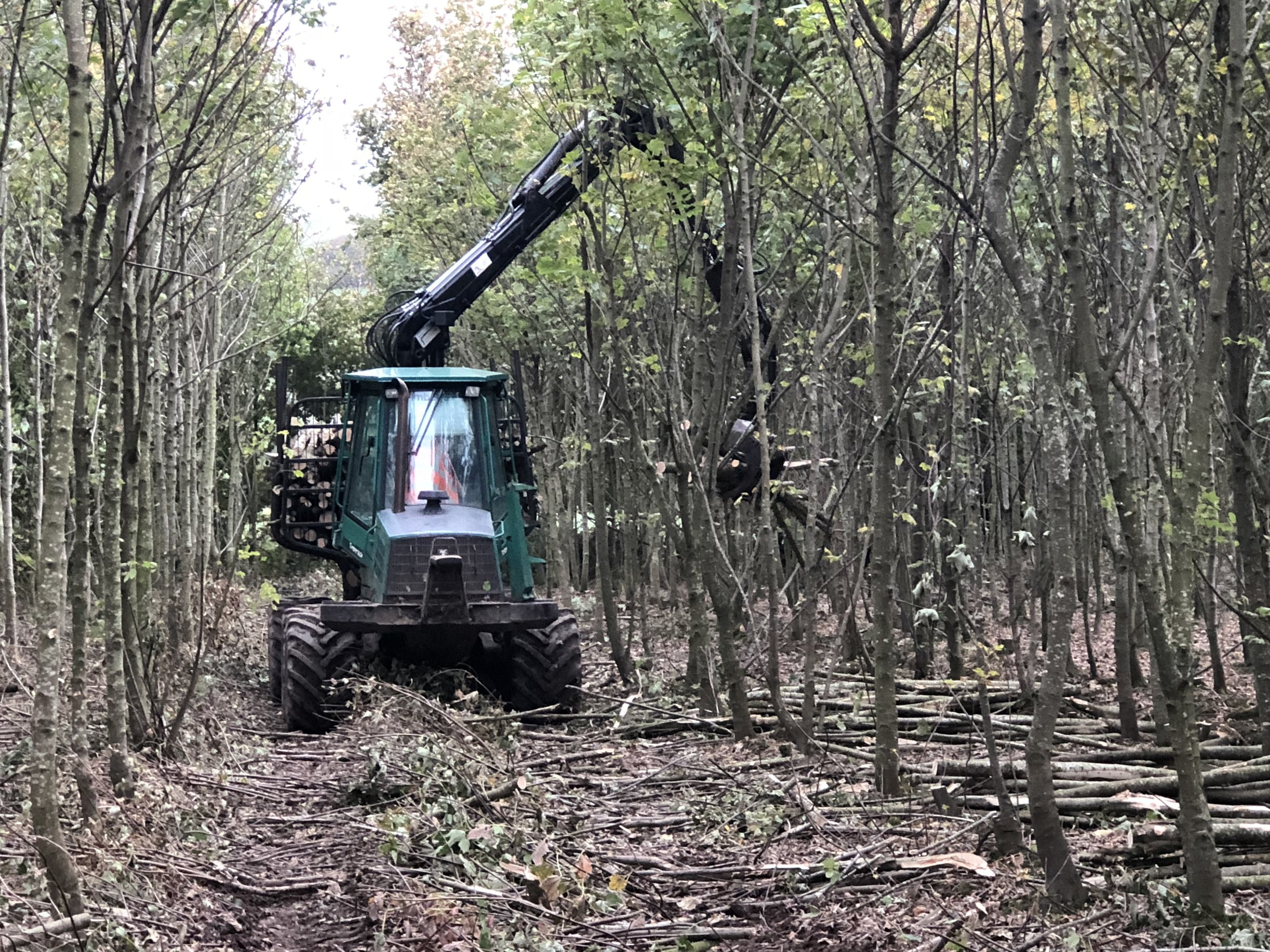 Broadleaf Thinning Extraction, North Wexford 2018.