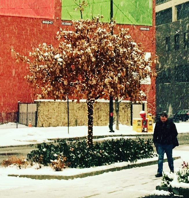The Happy Tree (Photo: Diane Wilson)