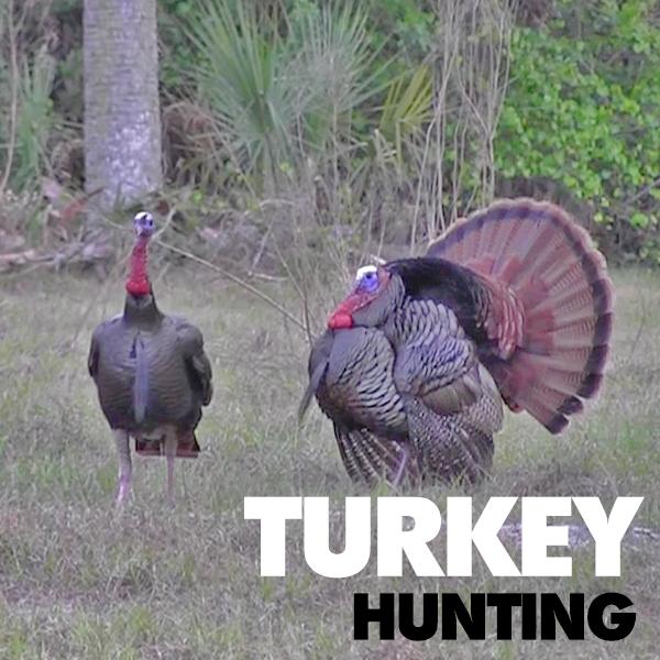 Florida-Osceola-Turkey-Hunting-Trips.jpg