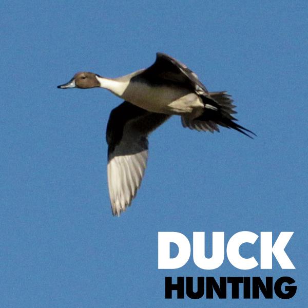 Florida-Duck-Hunting-Trips.jpg