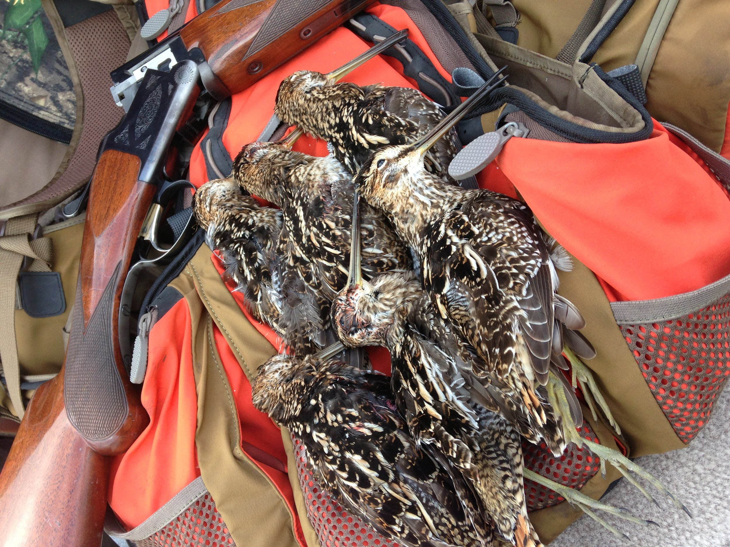 Everglades-Snipe-Hunting-Outfitters.JPG