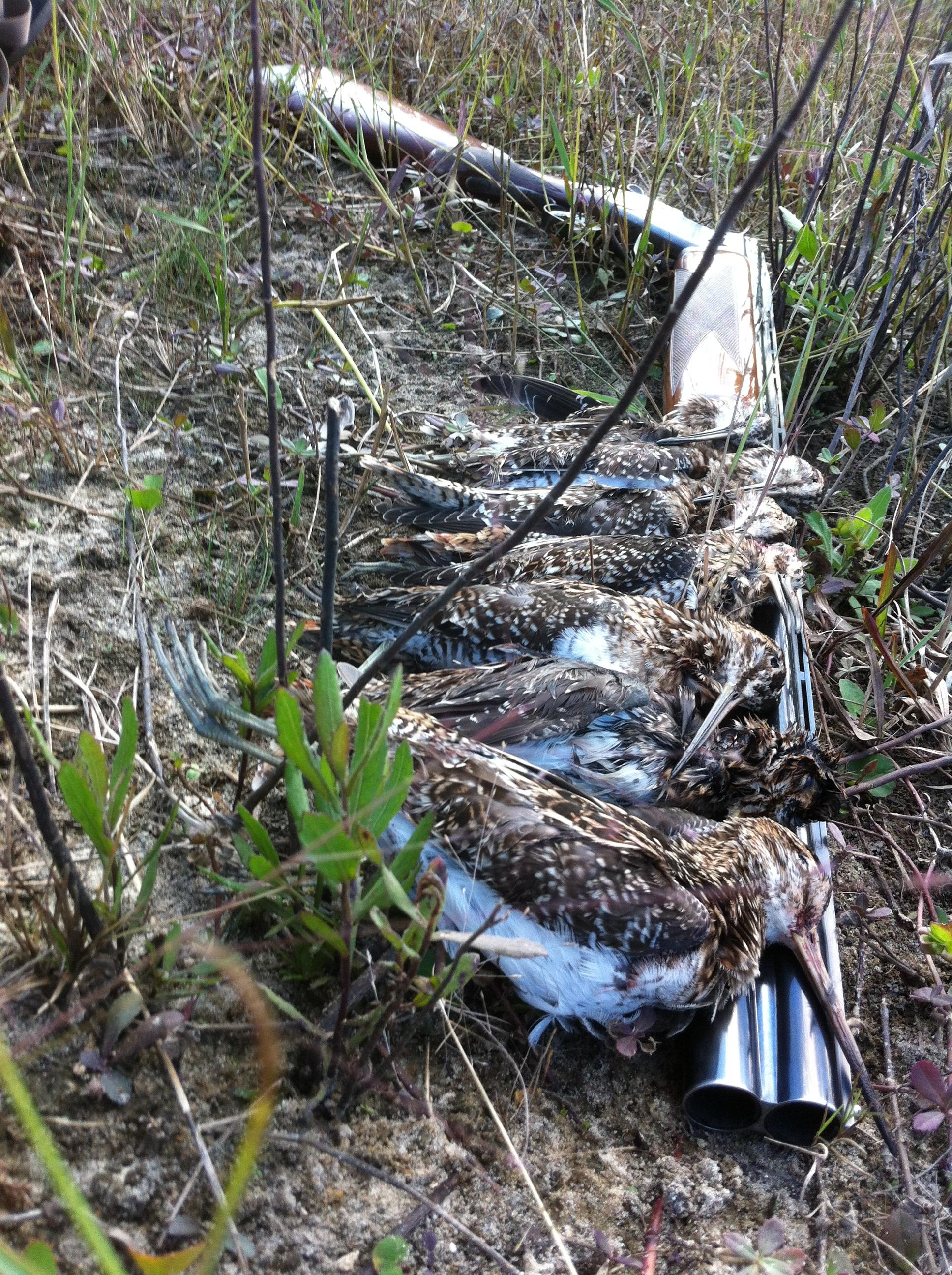 Everglades-Snipe-Hunting.JPG