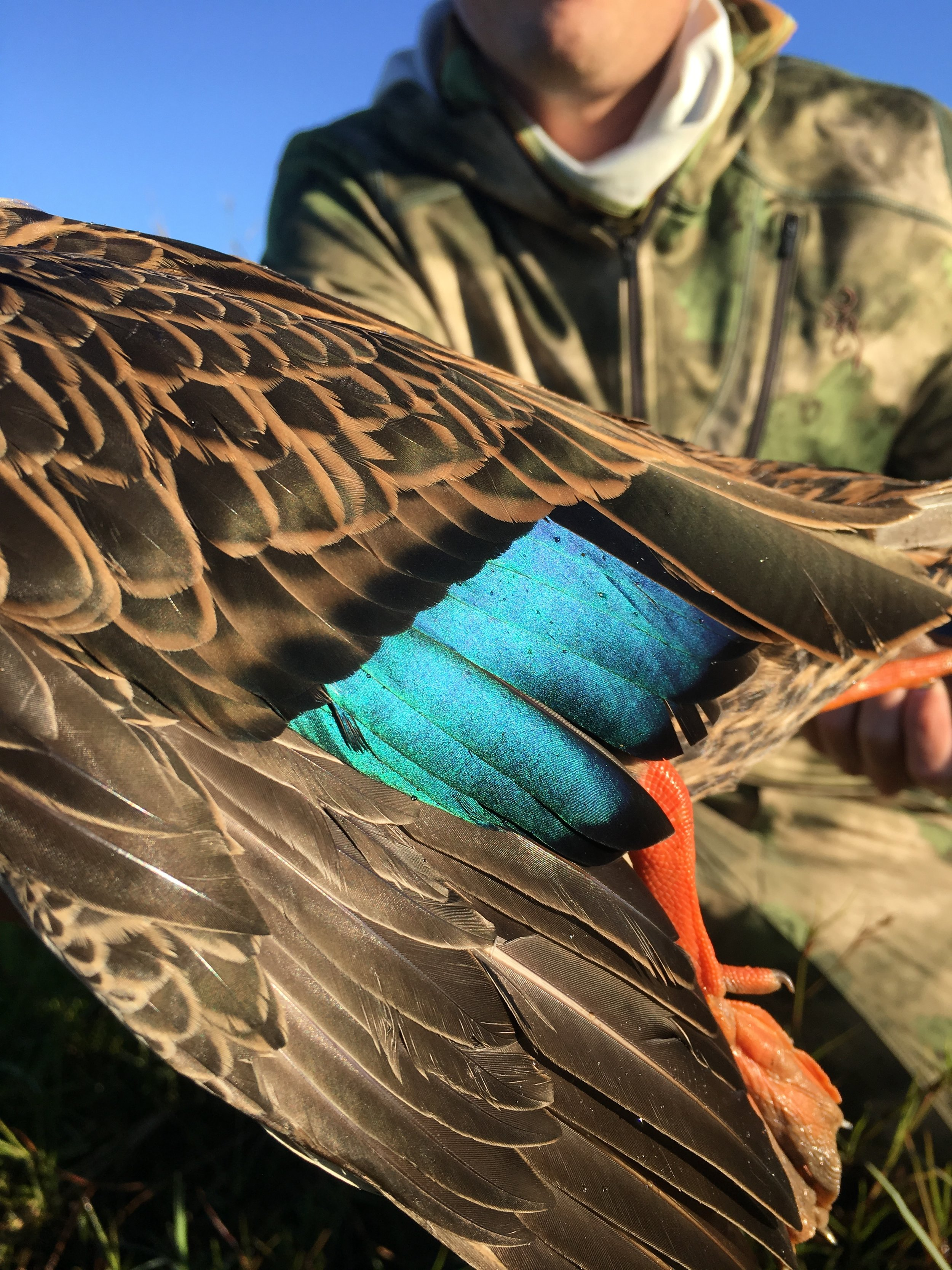 Naples-Duck-Hunting-Guides.JPG