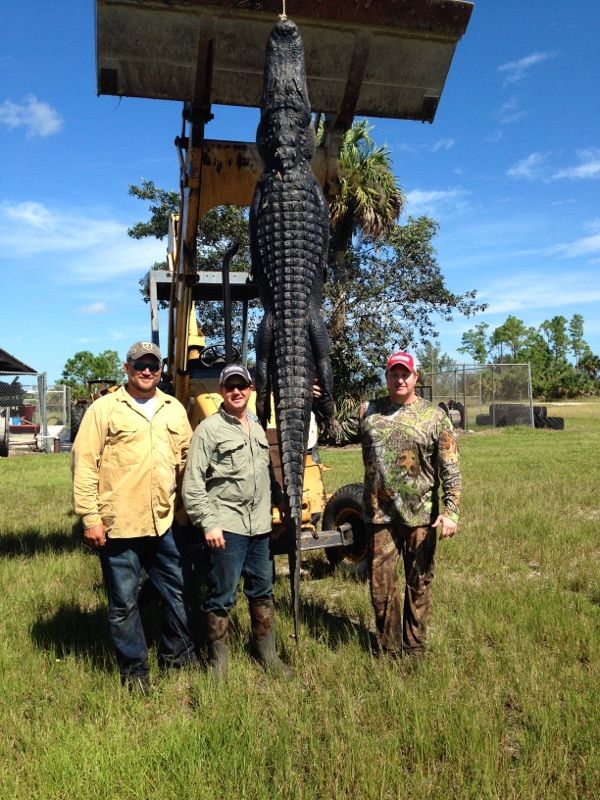 Everglades-Alligator-Hunting-Outfitters.jpg
