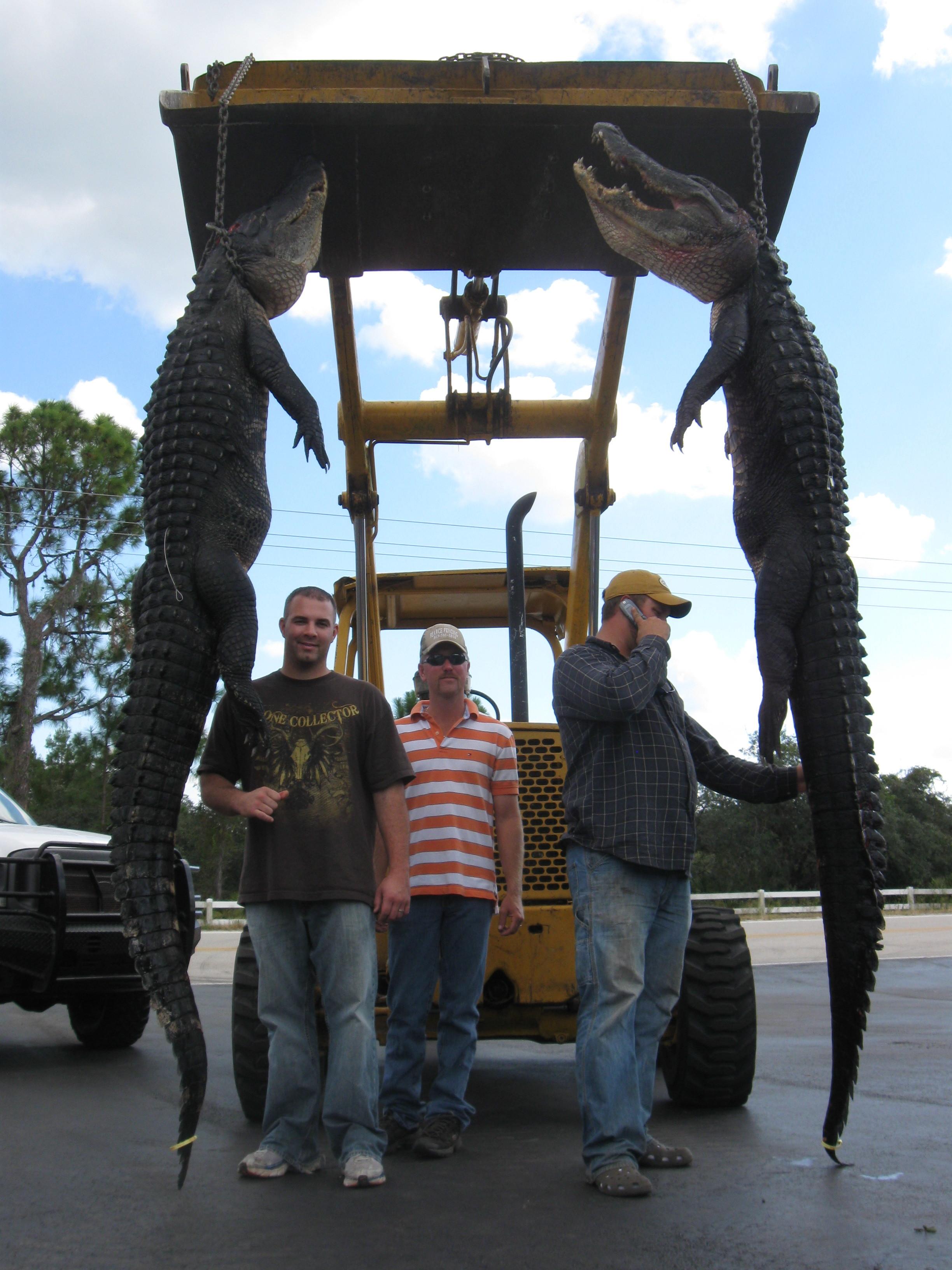 Tampa-Alligator-Hunting-Guides.JPG