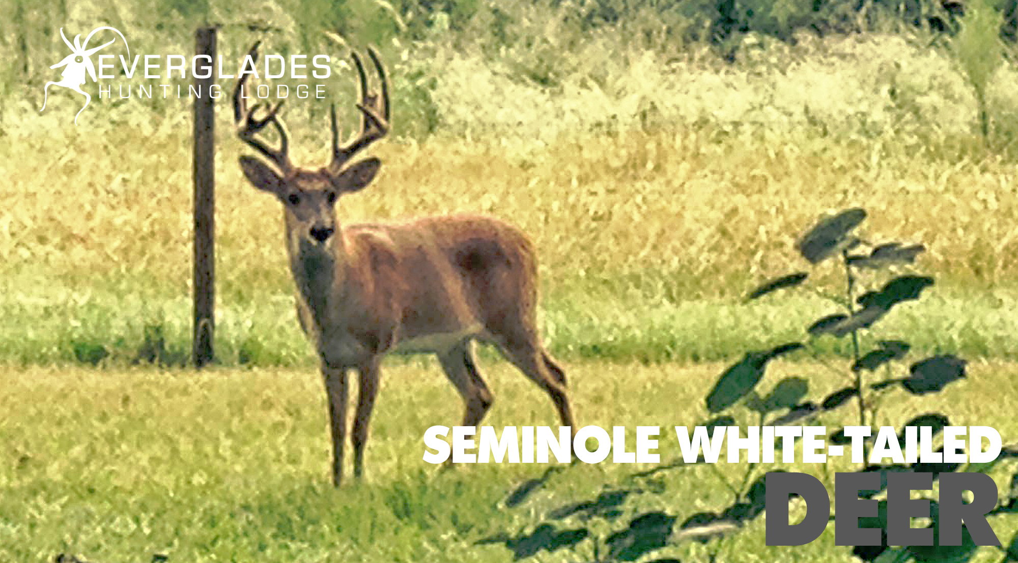Seminole-White-Tailed-Deer-Hunting.jpg