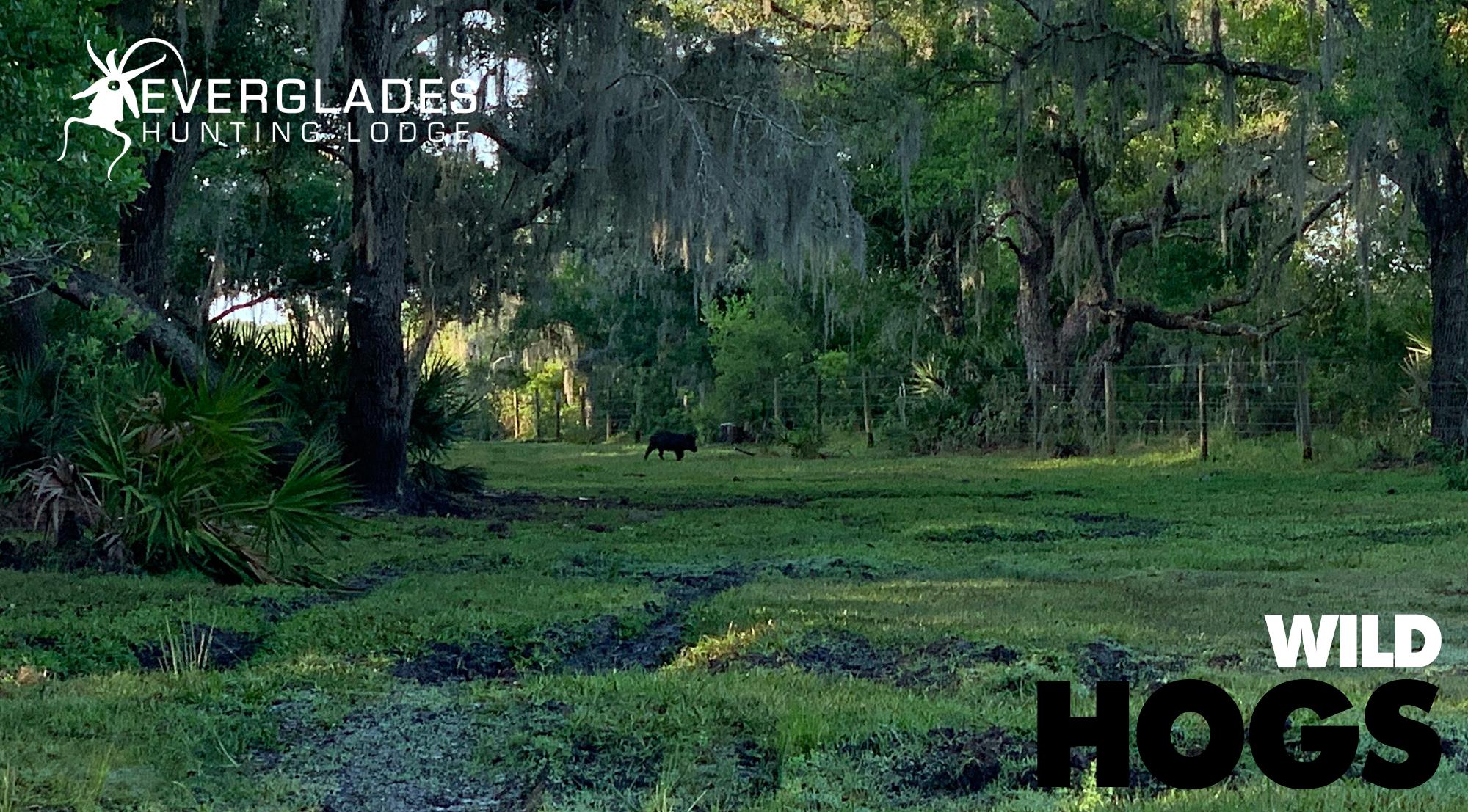 Florida-Wild-Boar-Hunting.jpg