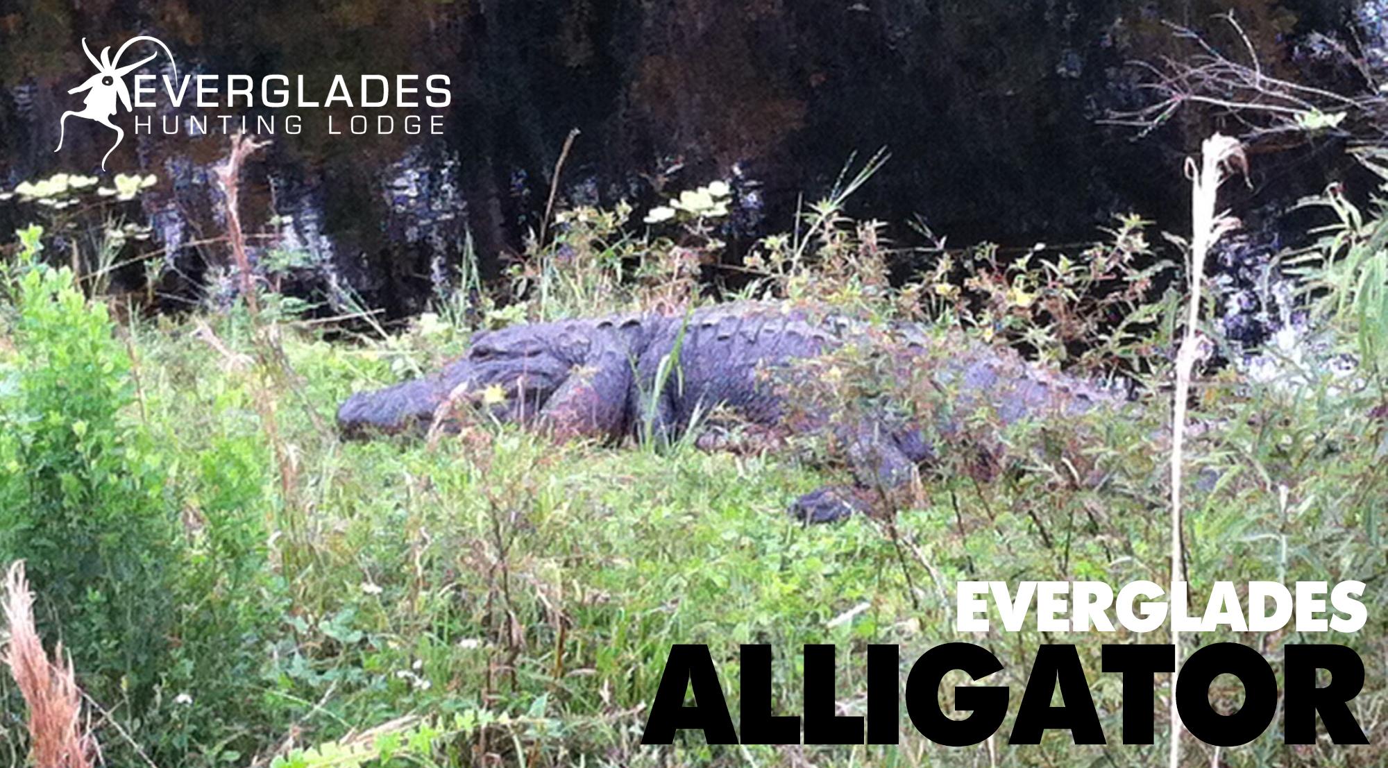 Florida-Alligator-Hunting-Guides.jpg