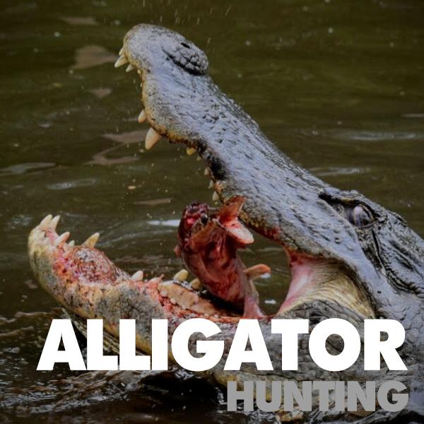 Florida-Alligator-Hunting-Trips.jpg