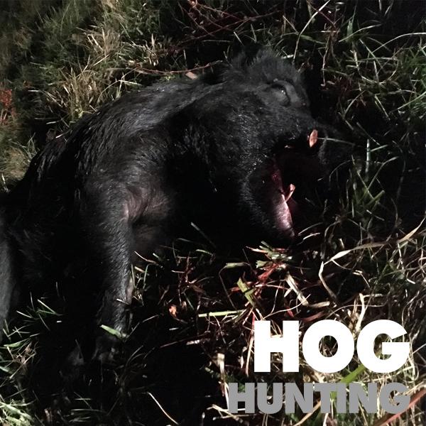 Florida-Hog-Hunting-Trips.jpg