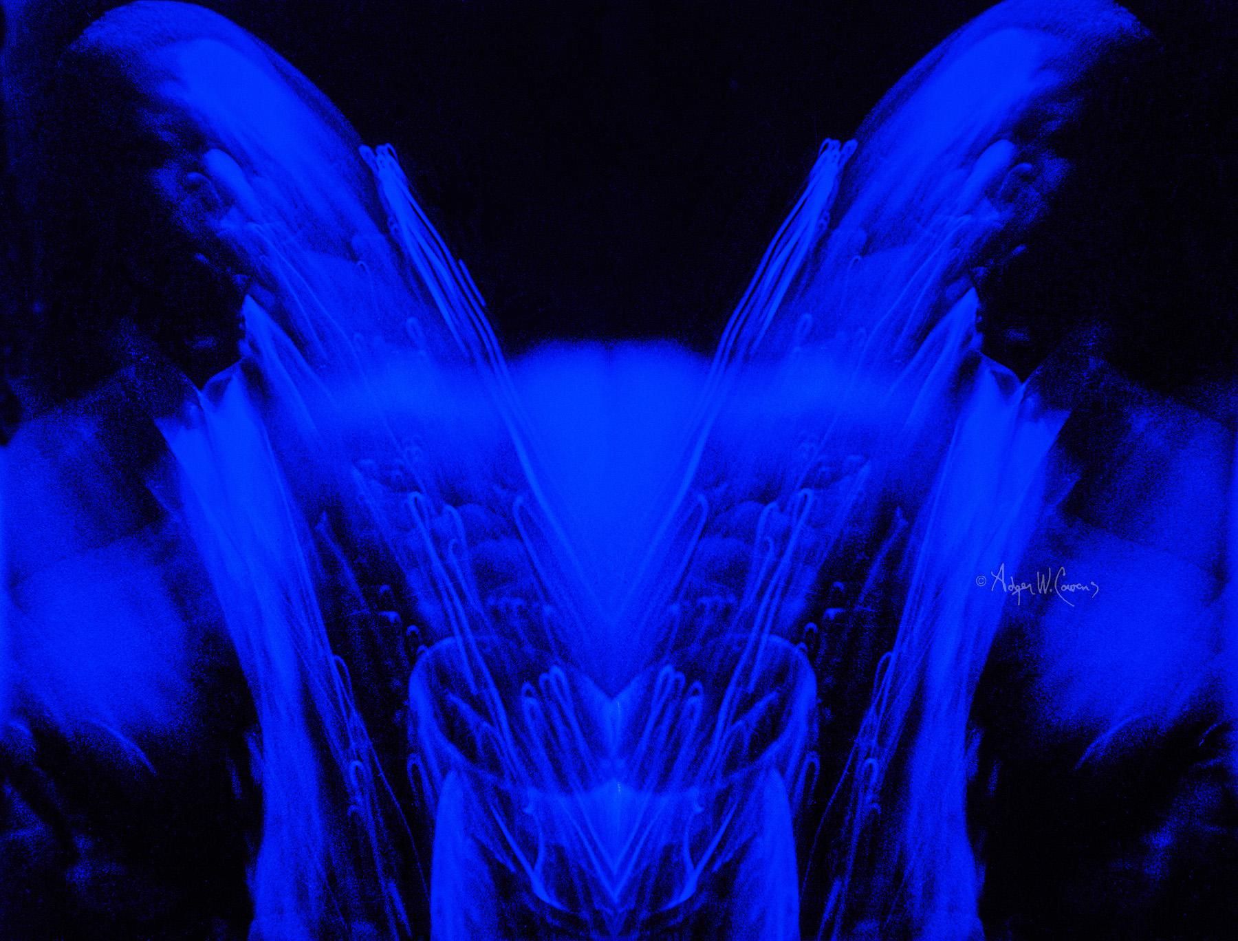 BLUE TRANE.jpg