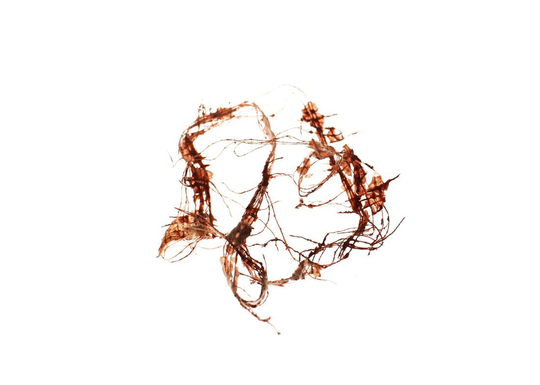 Tear Apart #9 - Hayla Ragland