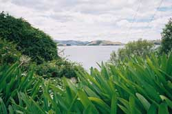 otago_peninsula2.jpg