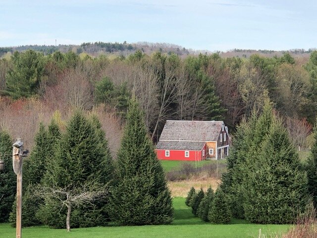 The Whalens have been growing Christmas Trees on their property since 1998, and on average attend to approximately 450-500 trees at any one time on 1/3 of an acre.