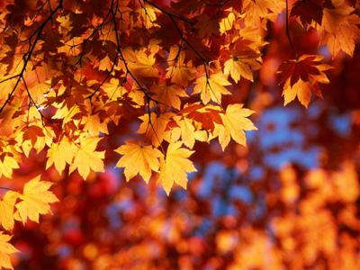 autumn-leaves2.jpg