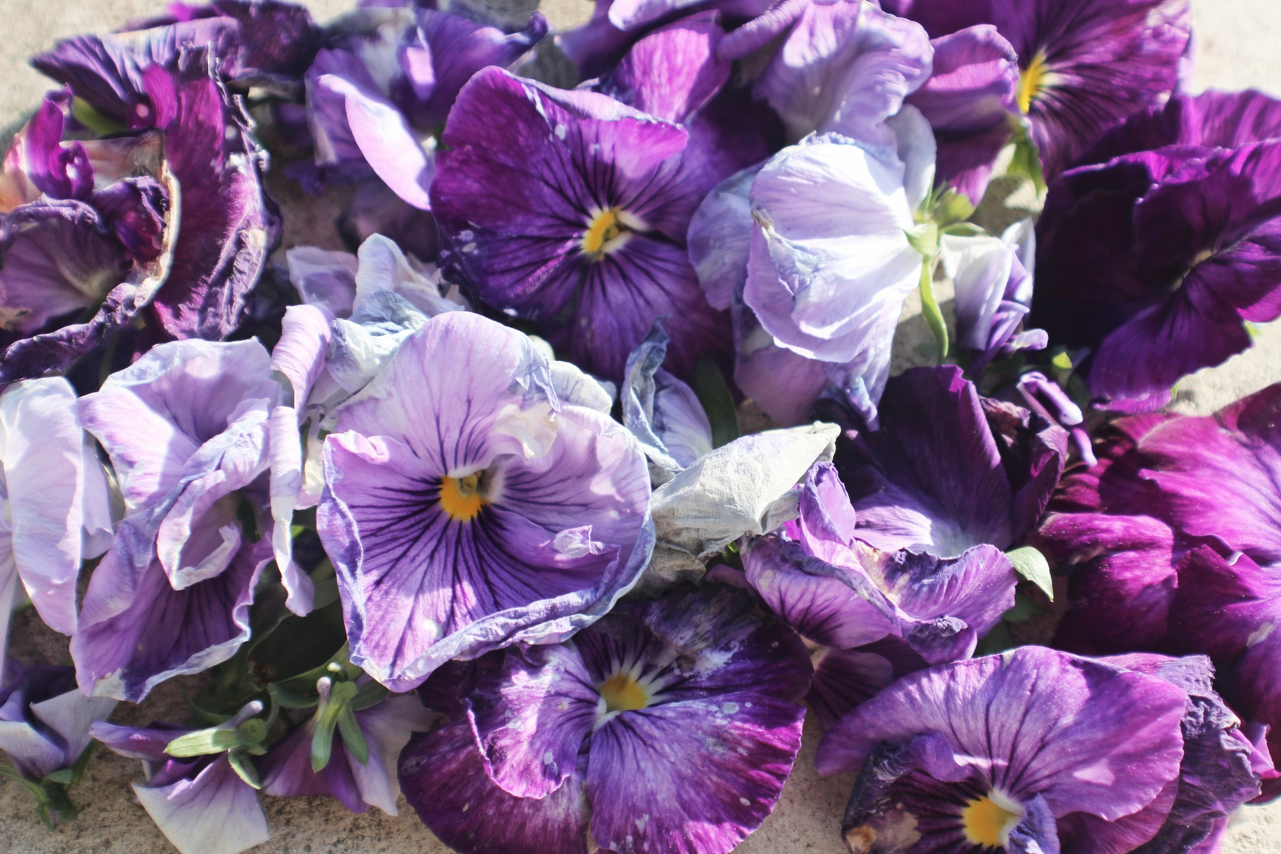 Language of Flowers - pansies are for thoughts of you.