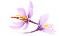purplesm.png