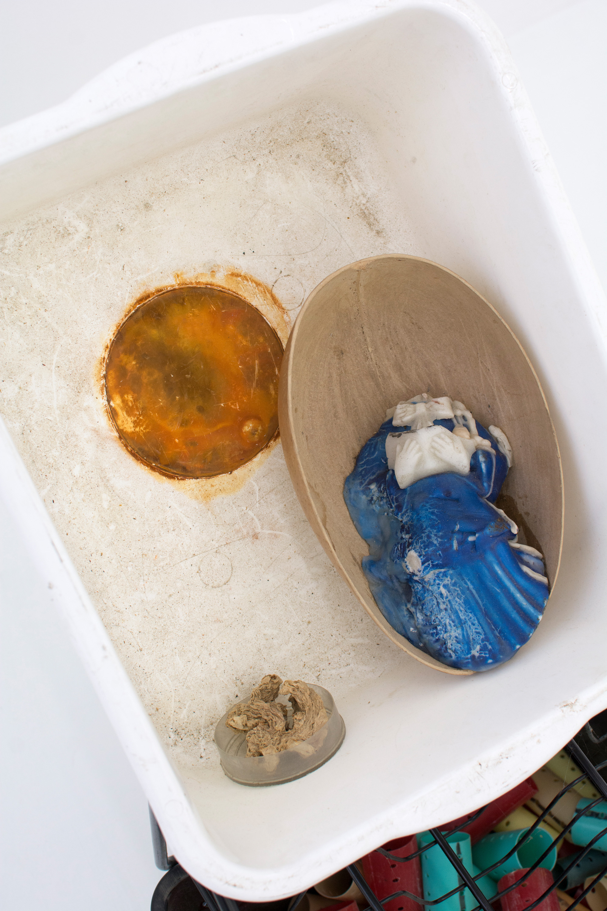 GEORGIA DICKIE    Pisetions 4 , 2016, Plastic drawer and basin, wax, dried ginger, various found objects (detail)