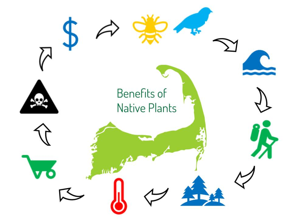 Native plants are the basis of our ecosystem -