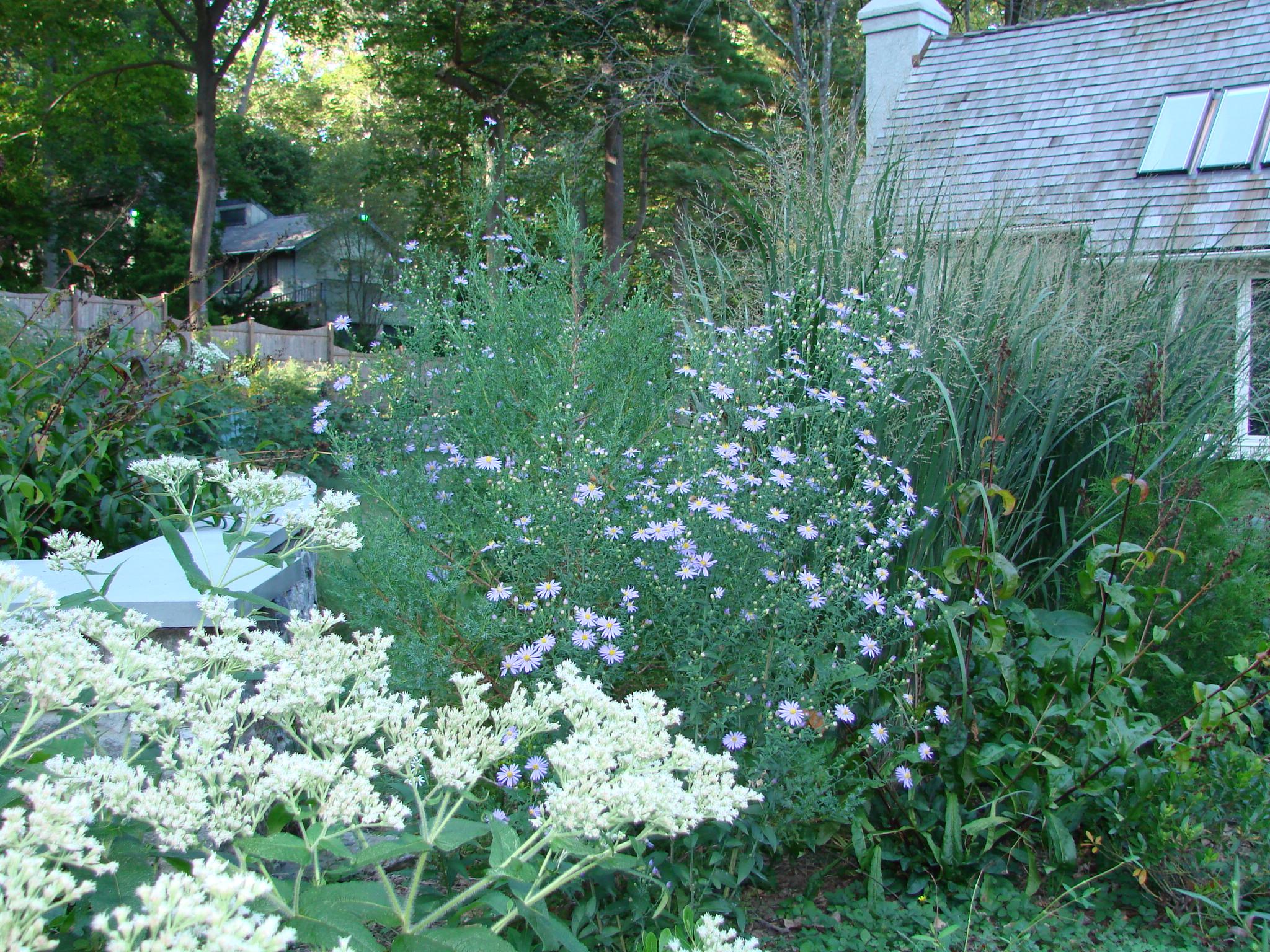 my garden sept10.JPG