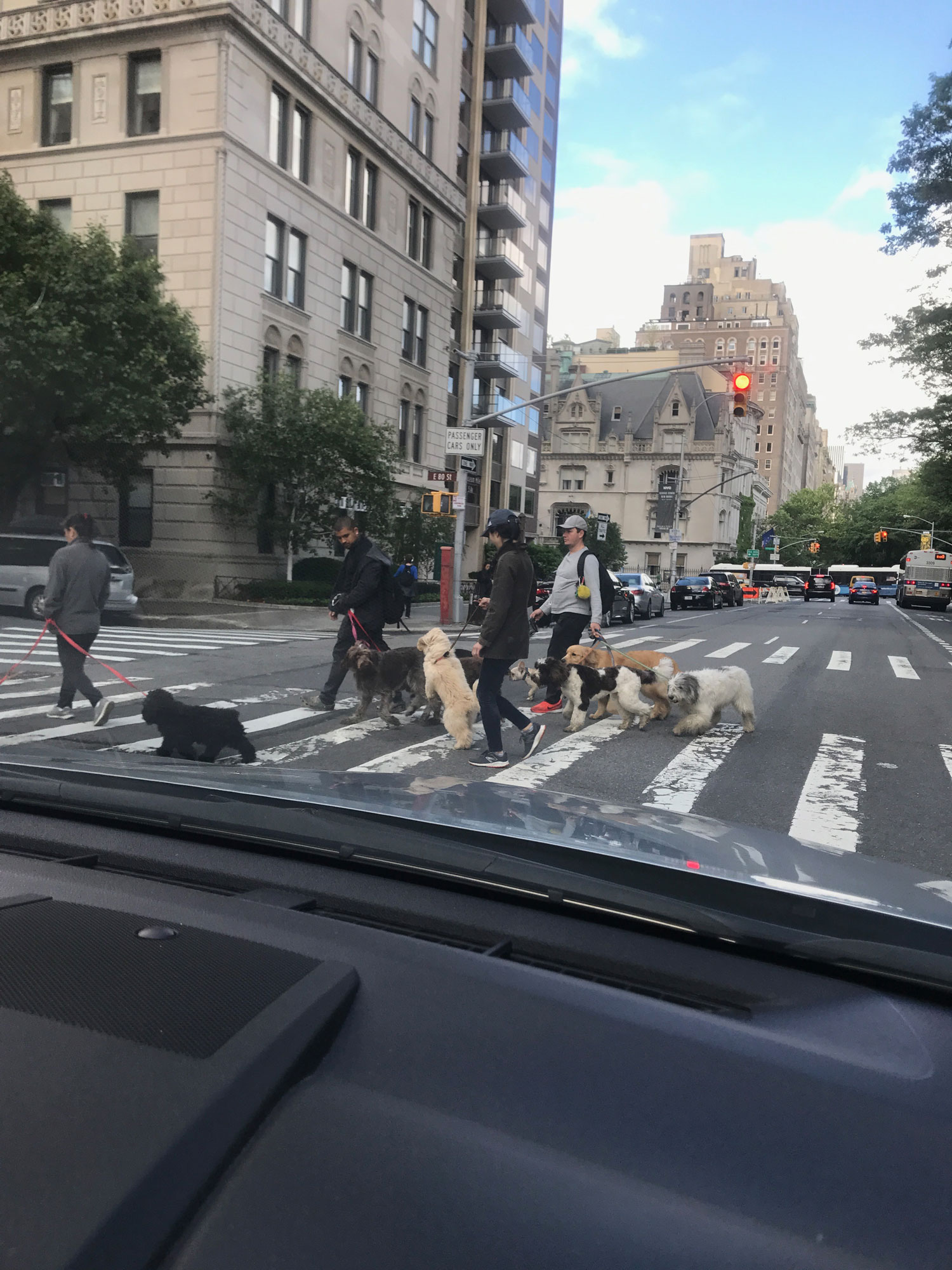 Abbey-Road-Dog-Cross-NYC-web.jpg