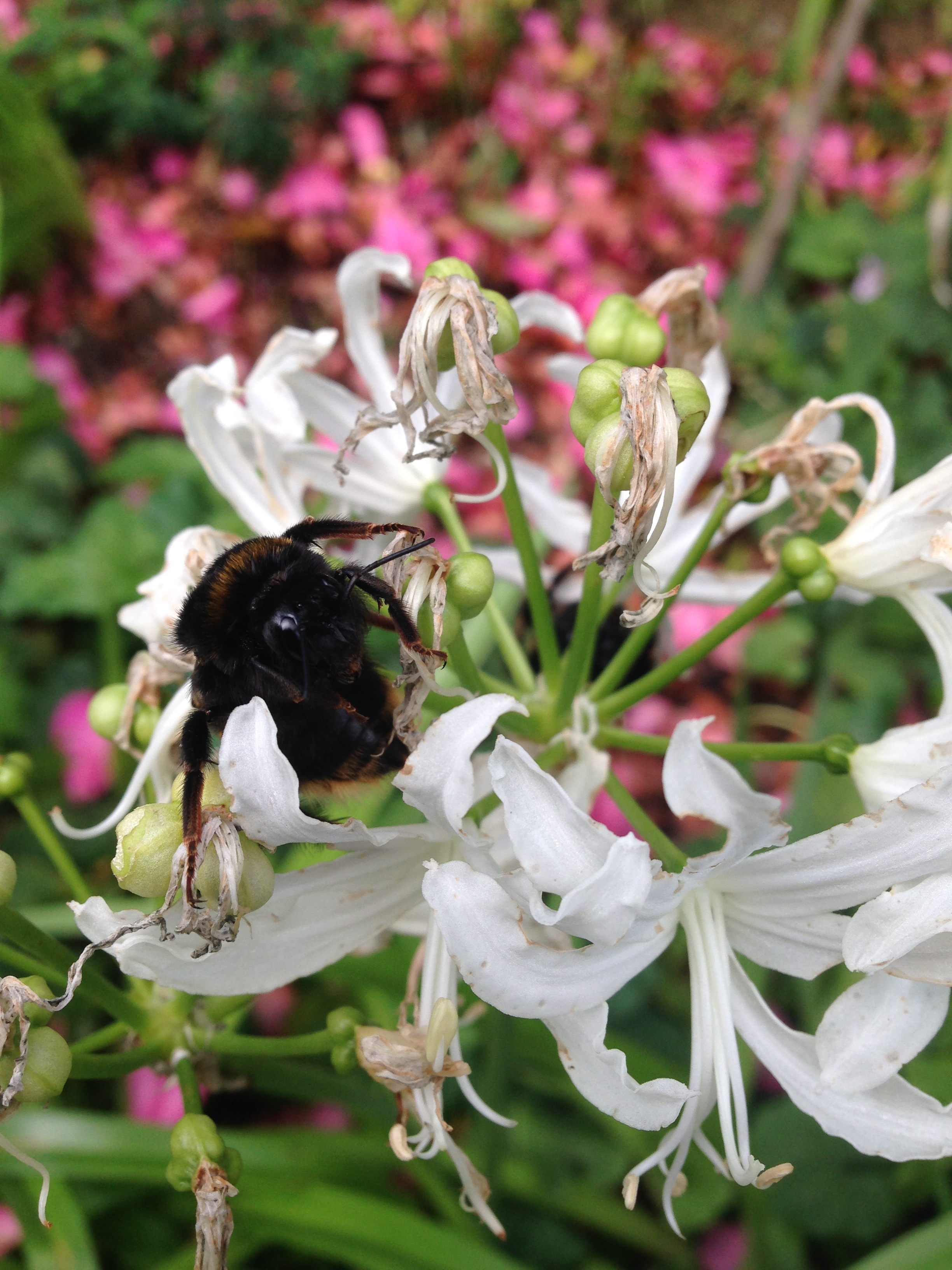 We're the bees knees. - We don't use pesticides, fungicides, or anything that is likely to poison plants, bugs or animals. If you have an insect problem, we deal with it at the source directly, removing places they may like to hide, altering garden beds and sustaining plants in a way that helps them resist disease and the odd nibble from a snail.We control fungal issues with careful planting and hygienic garden management techniques.We know a lot about mouse, stoat, ferret and rat control, and can advise on the best traps, but we don't maintain currently offer trap maintenance as a part of our service.We pull weeds the proper way, removing all of them at their root, deadheading flowers so nothing spreads, and working long and hard at controlling convolvulous, agapanthus, wandering dew and similar. Regular, mindful weeding is better than any spray, any day- both for the look of your garden, the control of the weed, and the environment. We don't compromise.
