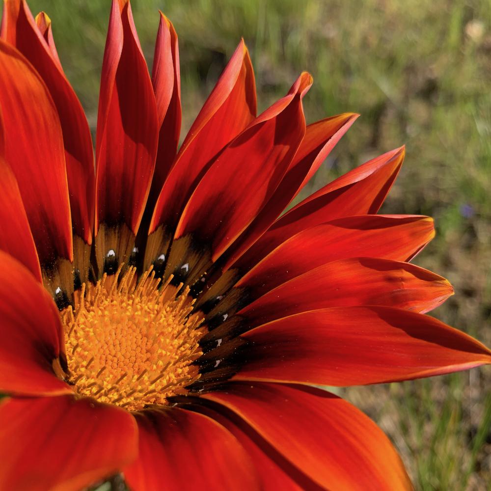 red_flower_shankari.jpg